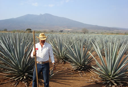 Blue agave farmer in Tequila, Mexico